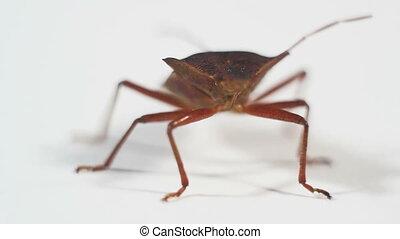 bug on white close-up