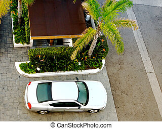Birds eye view on car and palm tree