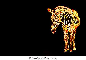 Fiery Flaming Zebra