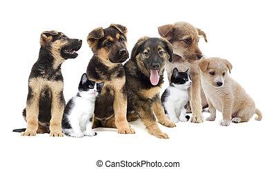Pets look