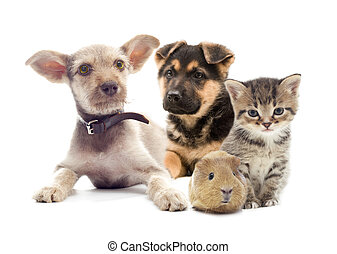 set pets on a white background isolated