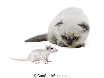 mouse and cat looking