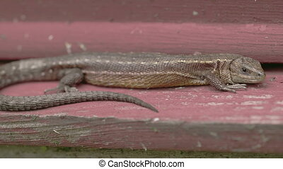 A brown common lizard on the wood