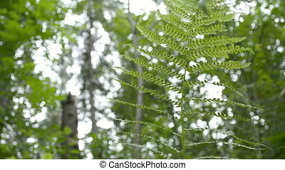 The beautiful fern leaves in the middle of the forest. A...