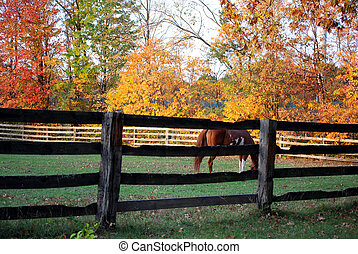 Country Splendor - Horse grazing in an autumn pasture.