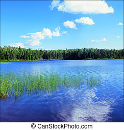 Homer Lake Vista - BWCAW, Minnesota - Serene summer vista on...