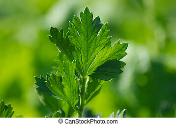 Celery on a green background