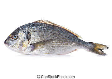 Gilt-head sea bream fish isolated - Raw Gilt-head sea bream...