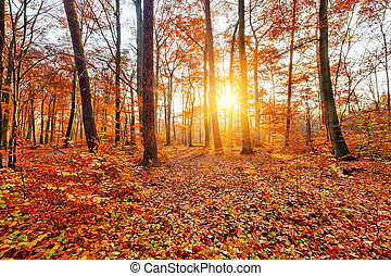 Sunlighted autumn forest - Colorful and foggy autumn forest