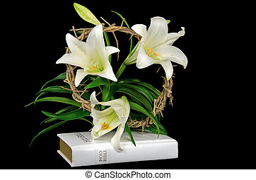 Easter lily with crown of thorns - White Easter lily and...