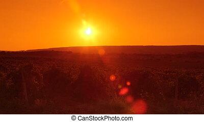 Valley vineyard at sunset pan shot