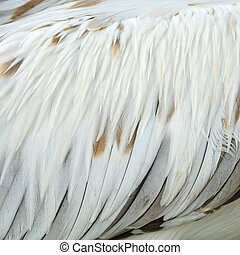 Spot-billed Pelecanus feathers - Texture abstract...