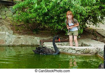 Little girl feeding a black swan in a pond
