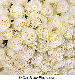 Abstract background of white roses - Abstract background of...