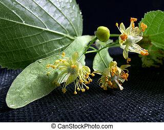Flavour linden flowers