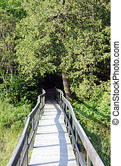 Wooden walkway - Picture of a wooden walkway in a Northtern...