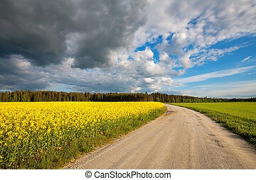 Country road Estonia - Rural road with yellow flowering...