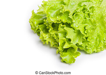 Fresh green lettuce leaf