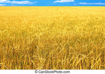Crop of rye