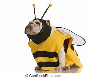 dog dressed as a bee - english bulldog dressed up as a bee...