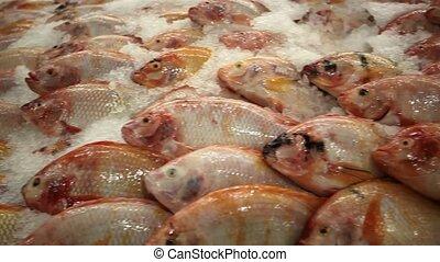 Fresh fish tilapia on ice in the market, Thailand Koh Samui