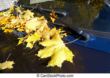 yellow autumn leaves on car.