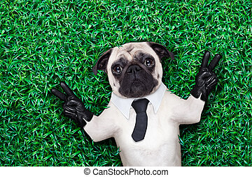 cool pug dog - pug dog in tuxedo or suit with tie resting on...