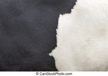 part of hide of black and white cow - part of the pattern on...