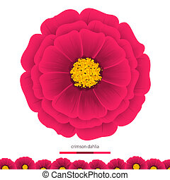 Beautiful flowers Dahlias Element for design Vector...