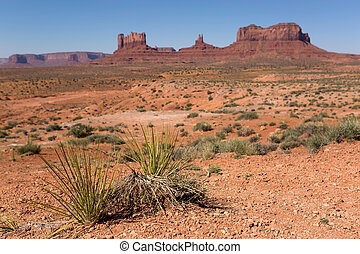 yucca plants in the desert with the Monument Valley in the...
