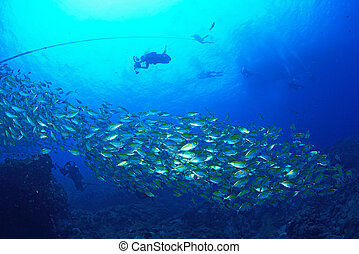 Beautiful Coral in Koh Tao, Thailand - School mackerel fish...