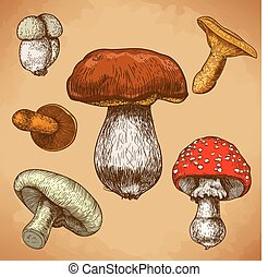 engraving illustration of mushrooms - engraving vector...