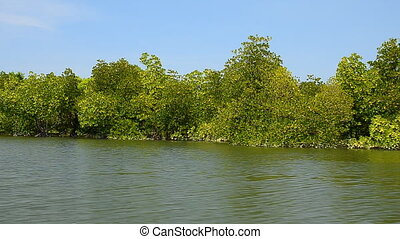 Mangroves and blue sky