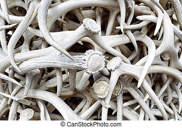 Elk Antlers - Closeup horizontal image of stacked real Elk...