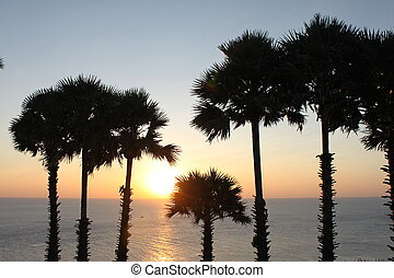 Coconut palm tree silhouette Sunset Thailand