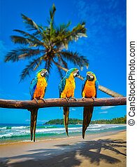 Blue-and-Yellow Macaw Ara ararauna parrots - Tropical...