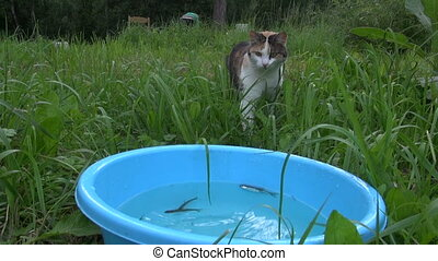 hungry cat catch fish - Hungry cute cat catch and eat fish...