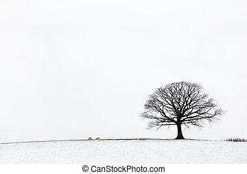Dąb, drzewo, Zima