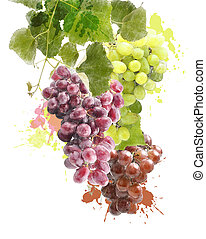 Watercolor Image Of Grapes - Watercolor Digital Painting Of...