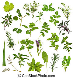 Large Herb Leaf Selection - Large herb leaf selection in...
