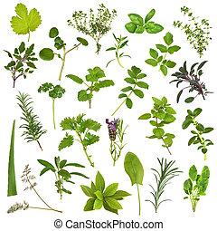 grande, erva, folha, seleção