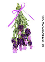 Lavender Herb Flowers - Lavender herb flowers and leaf...