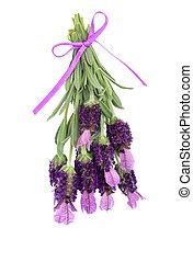 Lavender Herb Flowers - Lavender herb flowers and leaf...