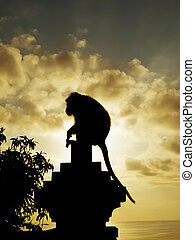 Monkey silhouette at sunset, Pura Luhur Temple, Uluwatu,...