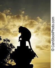 Monkey silhouette at sunset, Pura Luhur Temple, Uluwatu,...