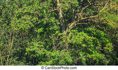 Flock of Birds on a Green Tree - Shot of flock of birds on a...