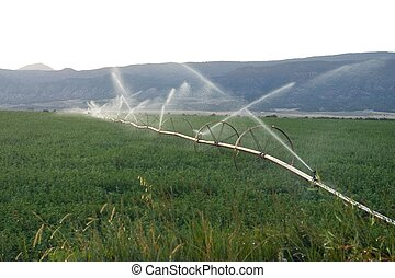 Irrigation - A wheel line operating in an alfalfa field