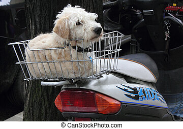 City life - This dog was patiantly waiting in tha basket, in...