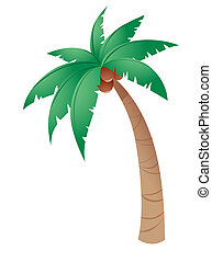 Coconut tree isolated in a white background