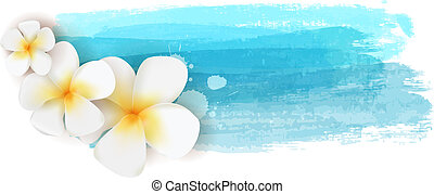 Plumeria on watercolor banner - Plumeria flowers on blue...